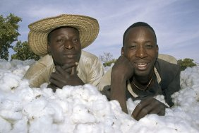 Value chain cotton